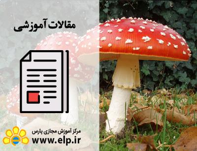 مقاله پرورش قارچ