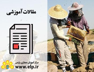 مقاله پرورش زنبور عسل