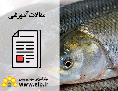 مقاله پرورش ماهی قزل آلا