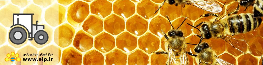 دوره آموزشی زنبورداری