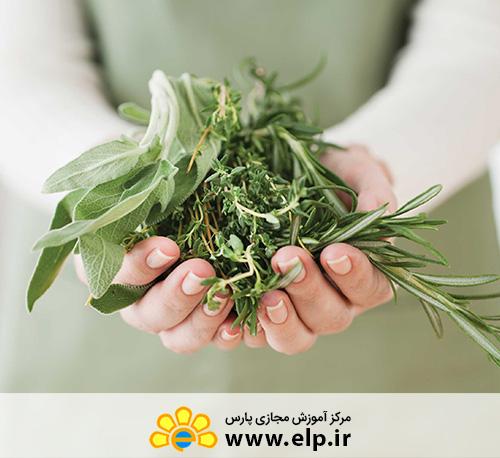 medicinal herbs salesmanship
