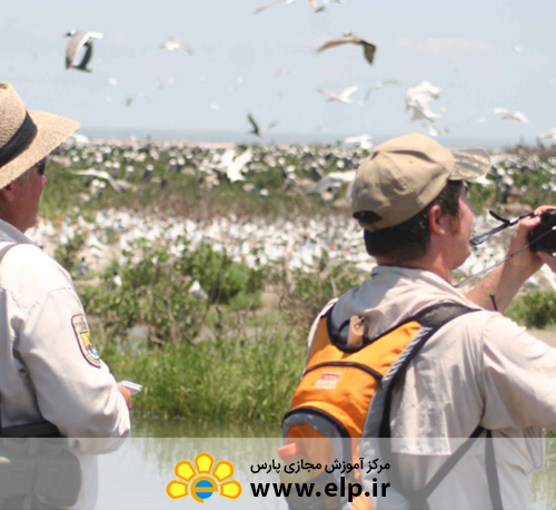 Bird Watching Guide and knowledge of birds nature