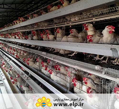 آیین کار بهداشتی و فنی مرغداریهای صنعتی 3484