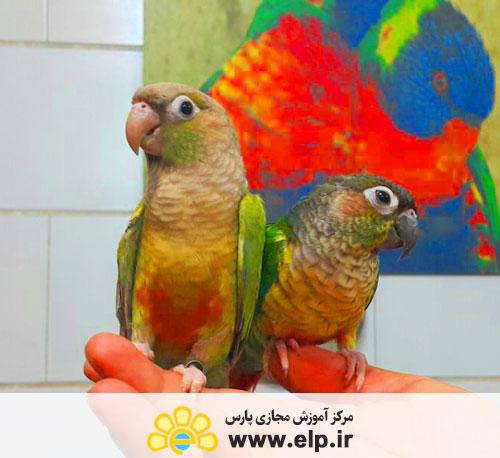 بررسی تخصصی حیوانات خانگی