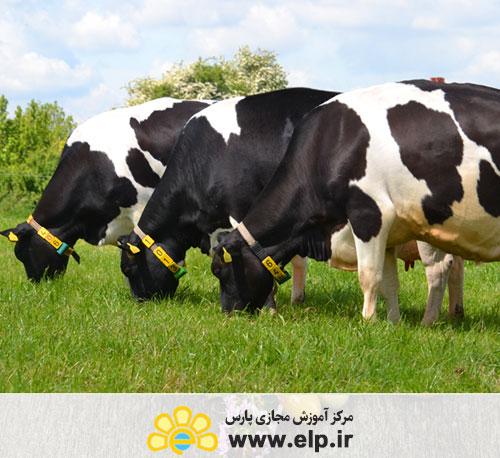 ارزیابی تیپ های گاوهای شیری
