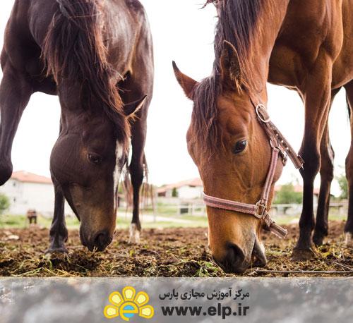 * تغذیه اسب