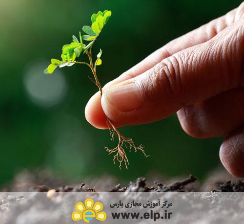 * کشت و پرورش گیاهان دارویی ریشه ایی
